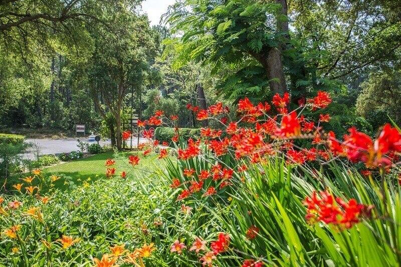 Arnaoutchot-bloemen