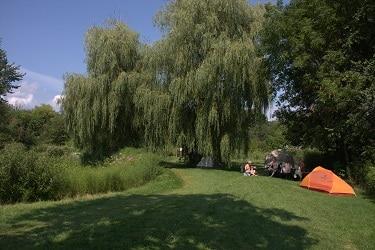 Bare Oaks tent 2
