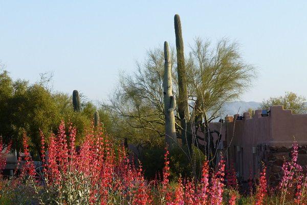Mira-Vista_Cactus