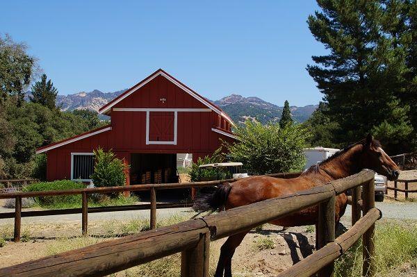 Paarden-Meadowlark