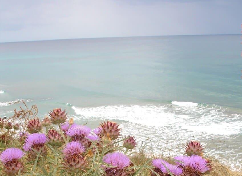Pizzo-Greco-de-zee