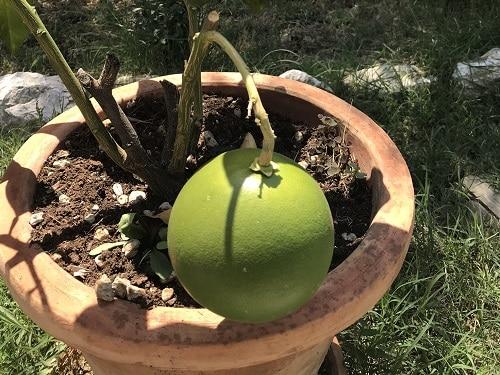 Vers fruit en kruiden uit eigen tuin